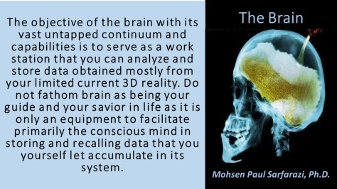 the-brain-2